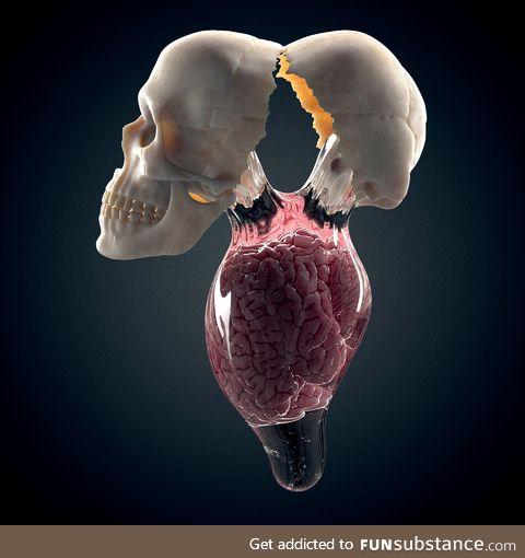 Brain yolk by ken Calvert