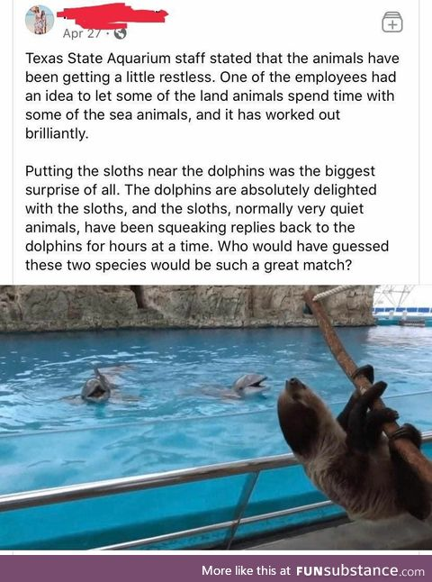 Dolphins and Sloths