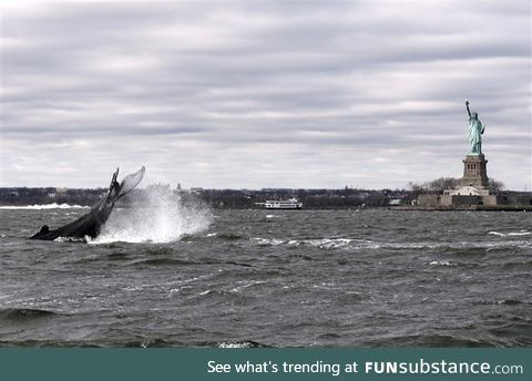 Humpback whale spotted in the Hudson on Monday