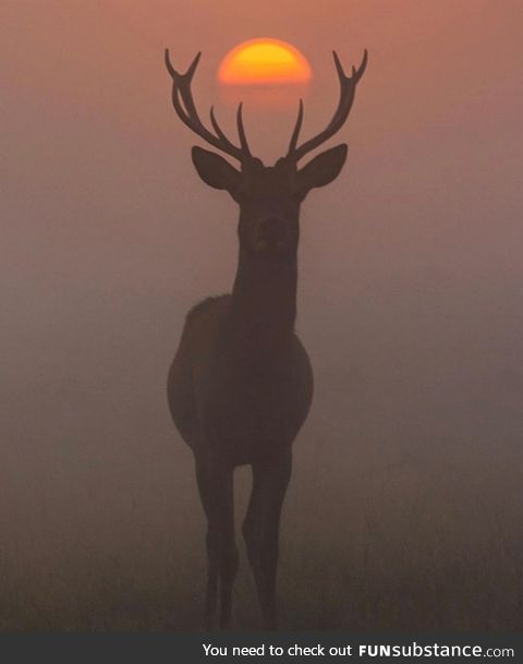 Deer standing perfectly in front of a sunset