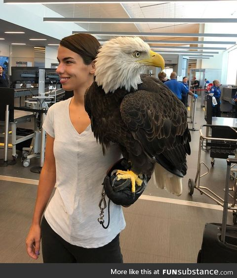 Clark the bald eagle out of his carrier while going through security