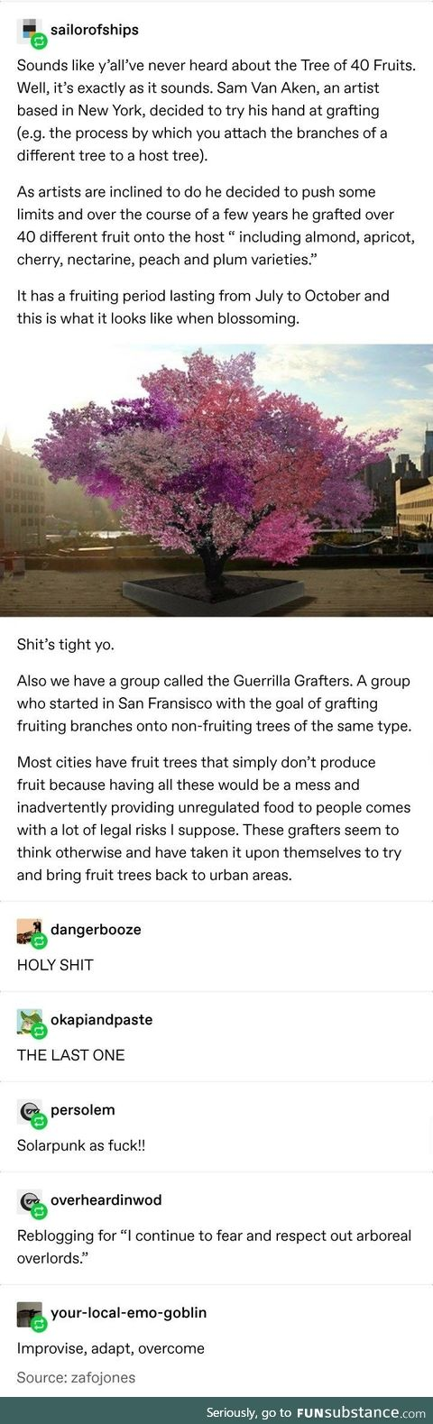 A Tree of 40 Stone Fruits