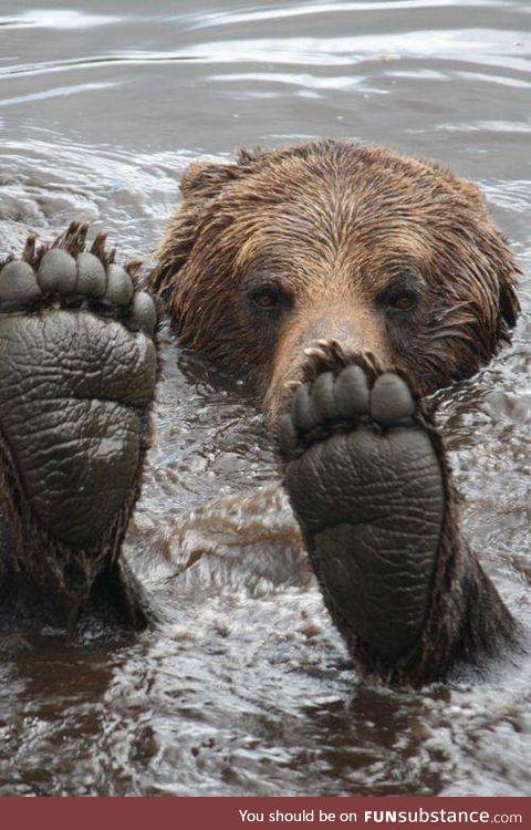 Bear Feets