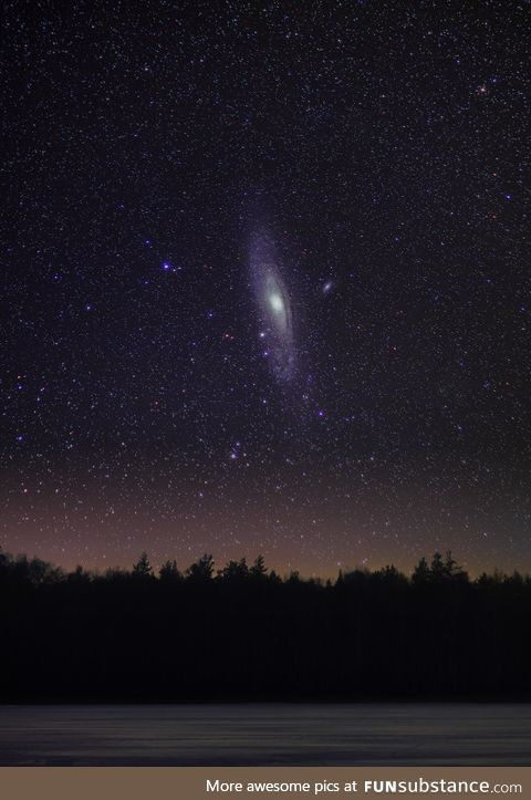 The Andromeda galaxy over a forest