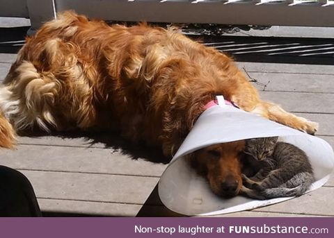Suddenly, The Cone Of Shame Isn't So Bad