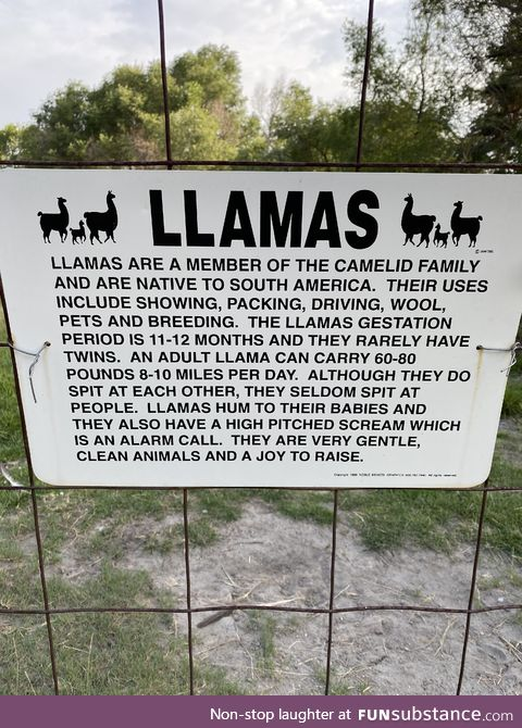 Llamas are a joy to raise, allegedly