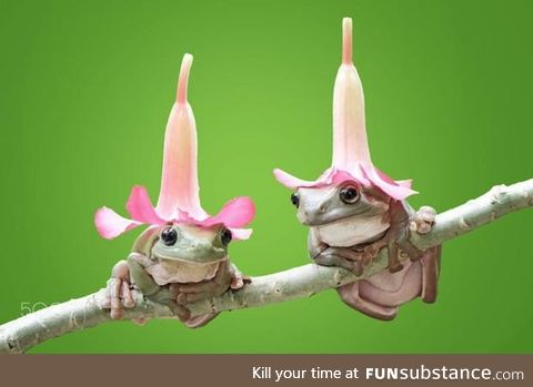 Froggo Fun #402 - Hat Buddies