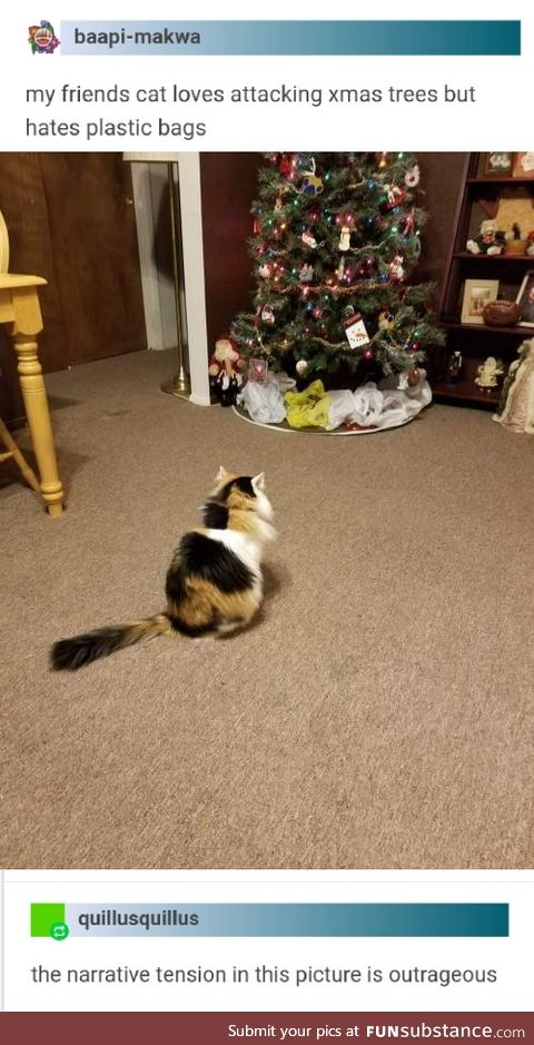Loves attacking the Christmas tree, hates plastic bags