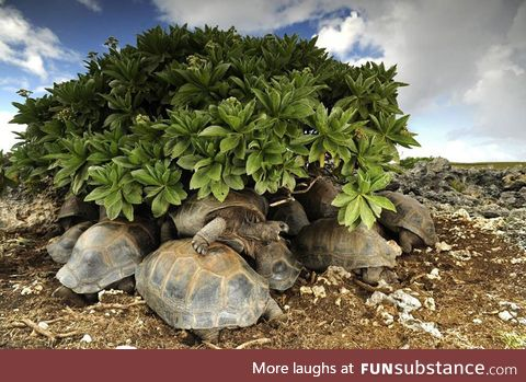 Turtles hide from the sun. They sinter in their shells if they stay in the heat for too
