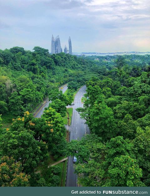 For such an urban city, Singapore has some beautiful greenery