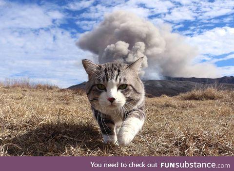Nuclear kitty.