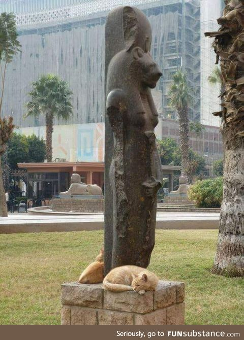 Cats surrounding the Egyptian Goddess Sekhmet Statue, who is known for her feline