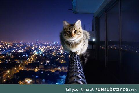 Brave kitty