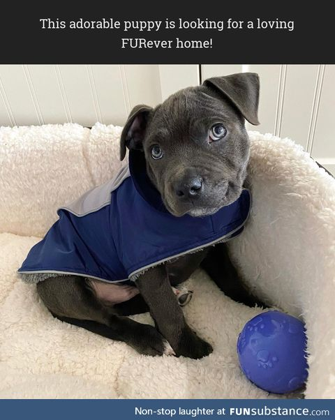 This adorable puppy is looking for a loving FURever home!