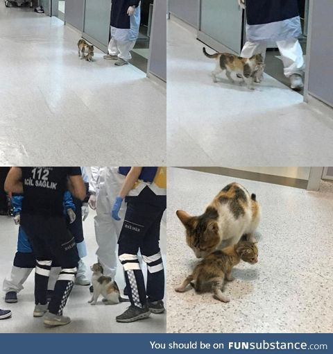 Mother cat in Istanbul brought her ailing cub to hospital