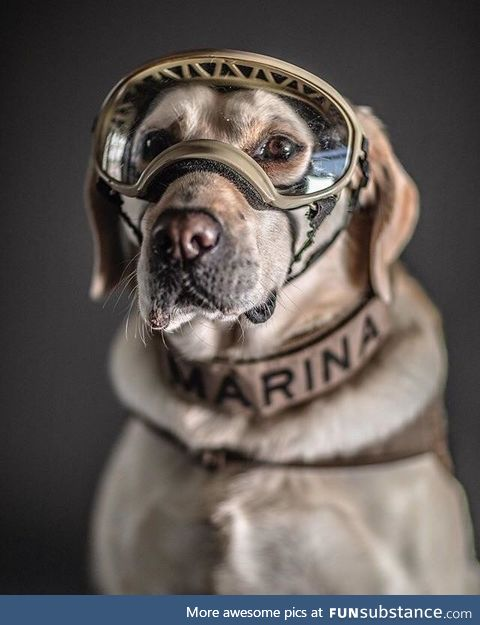 Frida, the Mexican rescue dog that has helped to locate more than 52 people in more than