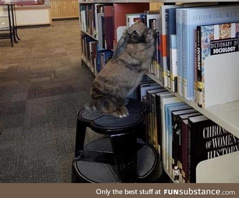 Rabbits make decent librarians