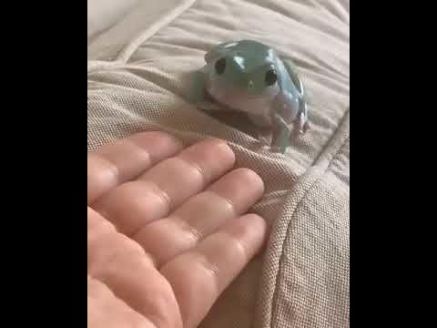 Froggo Fun #417 - Froggo Thinks They're Doggo