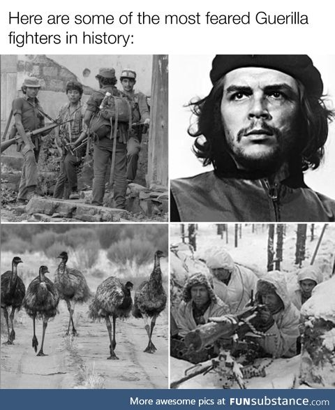 Emu goes brr brr