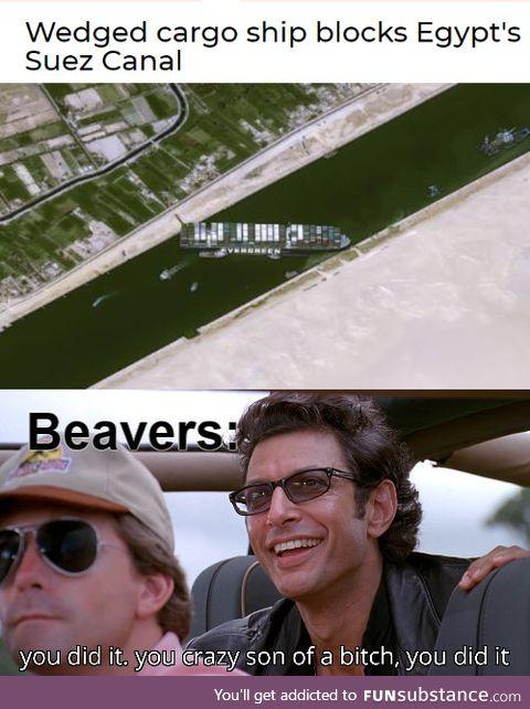 *happy beaver noises*