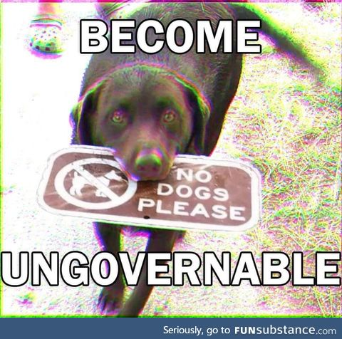 The dog is an anarchist