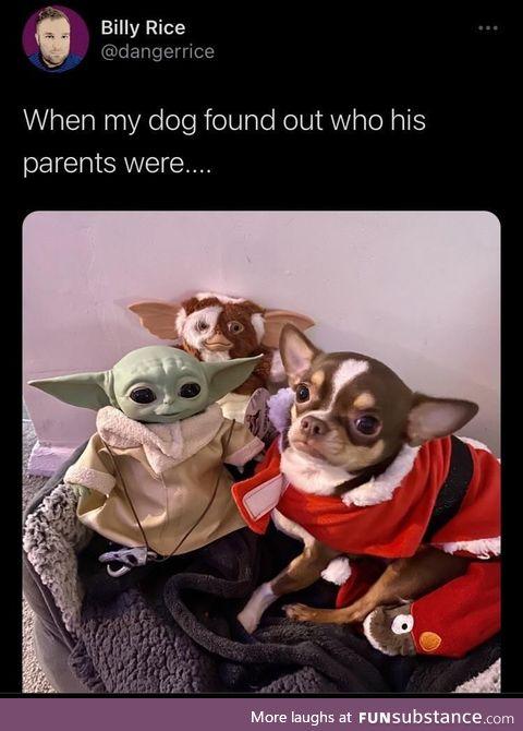 Yoda daddy, Gizmo!