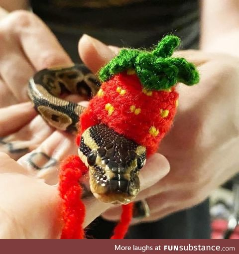 Making Hats For Snakes