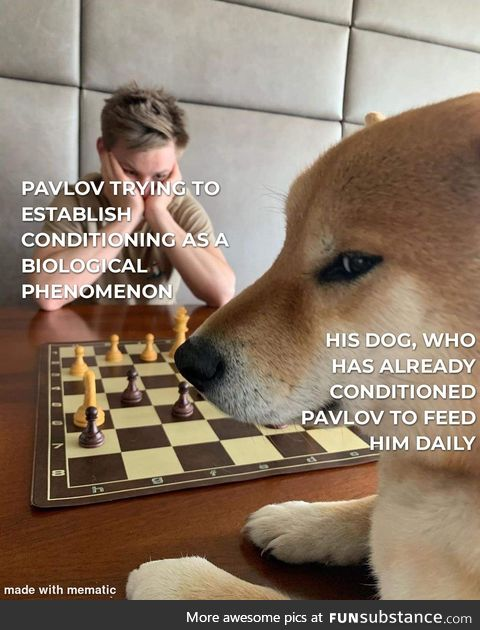 Tricking the doggo wasn't a good idea