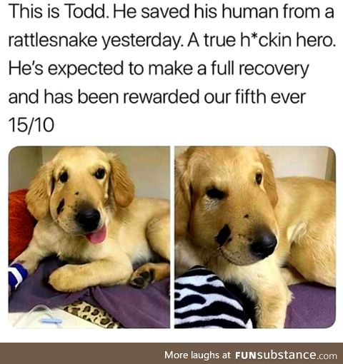 Saved his human from a rattlesnake