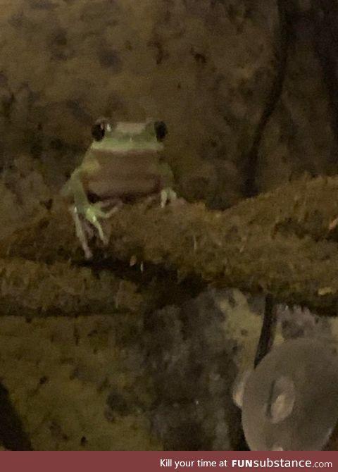 Froggo Fun #451 - The Game