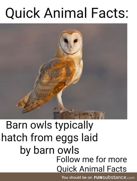 You have been subscribed to Barn Owl Fact!