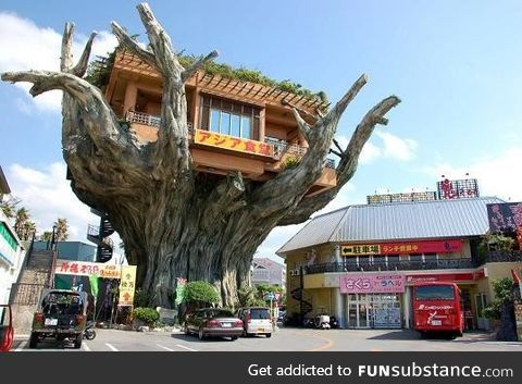The treehouse cafe in Okinawa, Japan
