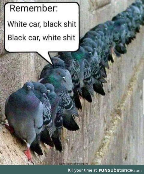 Gray car, gray shite