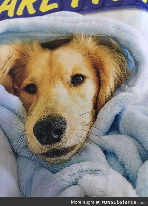 Puppy in a blankie