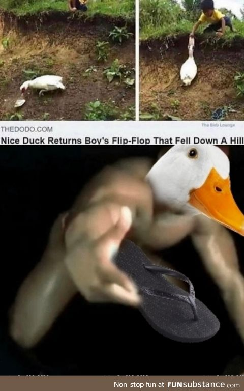 Such a good duck