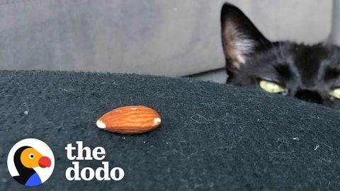 Scary Ninja Cat Loves Almonds