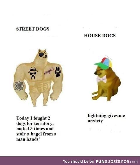 Just dog stuff