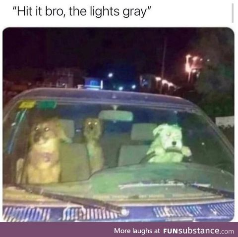 That's just the problem with letting dogs drive