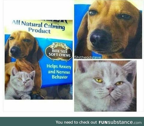 What kinda drugs are they putting in these animal treats