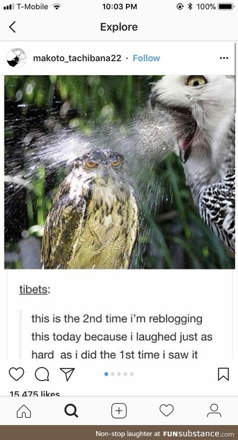 Can't owl be having a good day