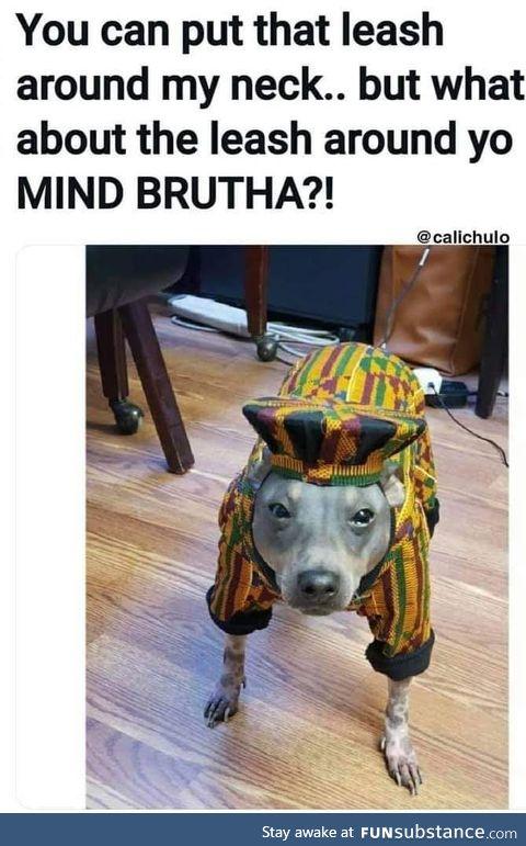 Woke pup
