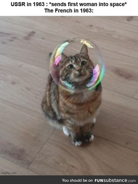 Sending a cat to space? The pinnacle of French science