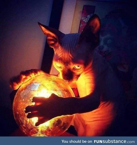 Lord Beerus plotting the next universe to destroy