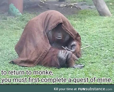 Its the elder monkey