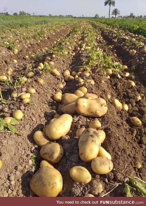 This morning - Good harvest