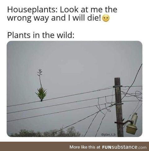 Nature's mysterious