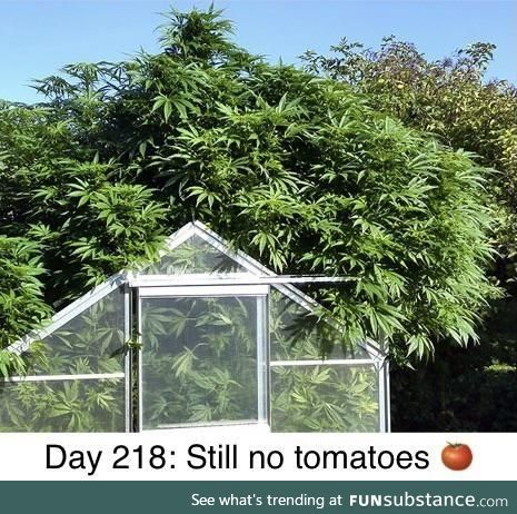 Darn things grow like weeds