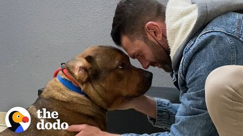 """""""Aggressive"""" dog that """"doesn't like men"""" meets his new """"foster"""" dad"""