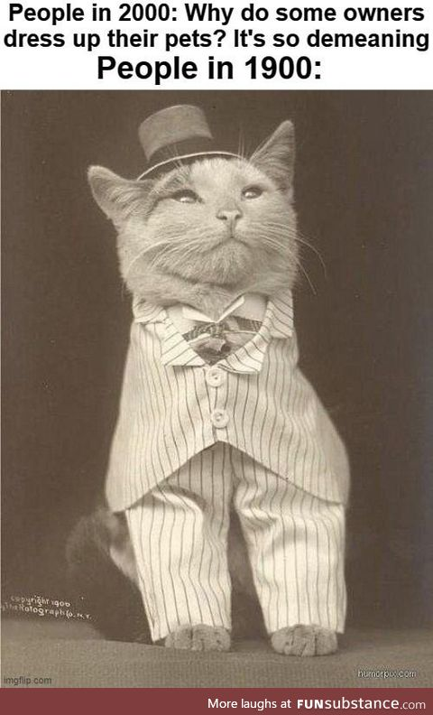 Why Lord Mittens, you look ravishing!