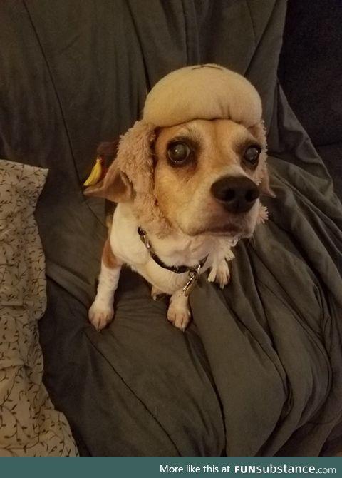 Here. It's a cute dog pic. It's my dog in a hat. It's cute.